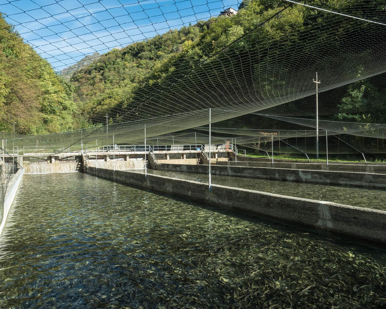 Allevamento Località Deva Lago di Tenno (TN) - Troticoltura Armanini