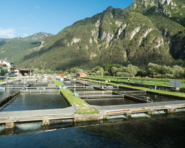Allevamento, punto vendita, fattoria didattica, pesca sportiva, casa del gusto a Storo - Troticoltura Armanini
